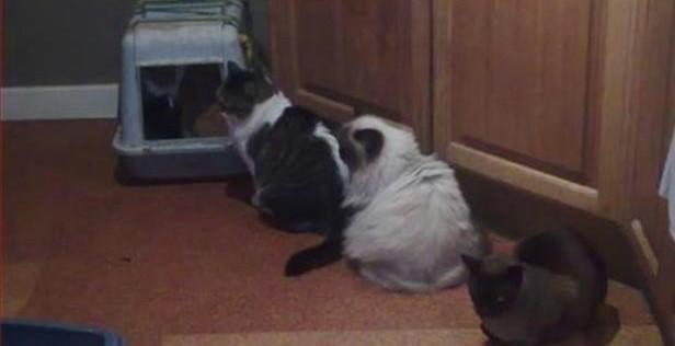 Foto gatti in fila per andare al bagno - Peretta per andare in bagno ...