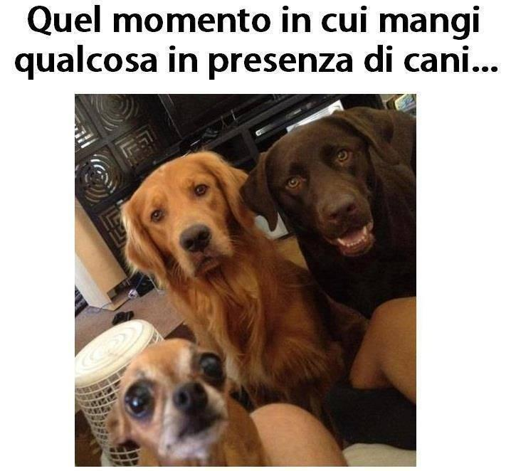 Ben noto Barzellette.net Foto: Come ti guardano i cani mentre mangi RW46
