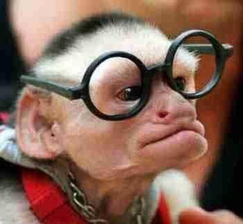 Barzellette Net Foto Scimmia Con Occhiali