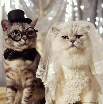 Barzellettenet Foto Due Gatti Vestiti Da Sposi