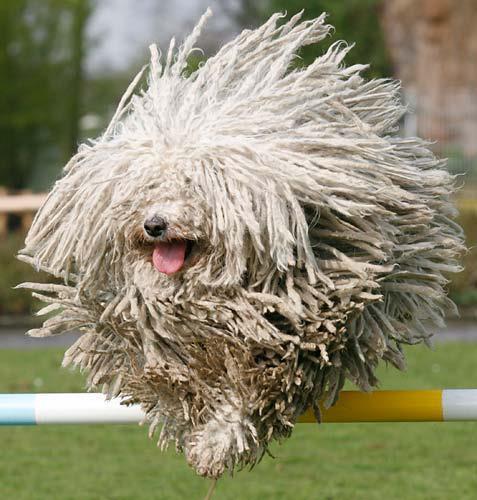 Dog Looks Like A Rug: Barzellette.net Foto: Cane Con Pelo Rasta