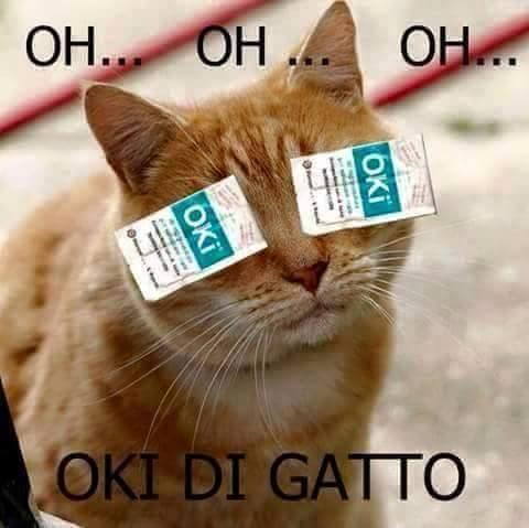 Barzellette Net Foto Gatto Con Oki Sugli Occhi