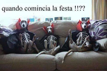 Foto cani seduti sul divano vestiti da sacheletri - Perche i cani scavano sul divano ...