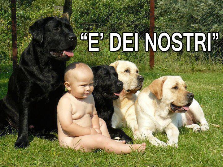 Popolare Barzellette.net Foto: Bambino che si confonde alla cucciolata di  KC11