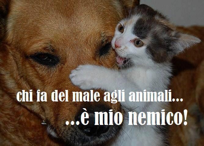Favoloso Barzellette.net Foto: Cane e gatto che si abbracciano DU61