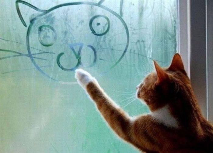 Top Barzellette.net Foto: Gatto che disegna sul vetro appannato JA44