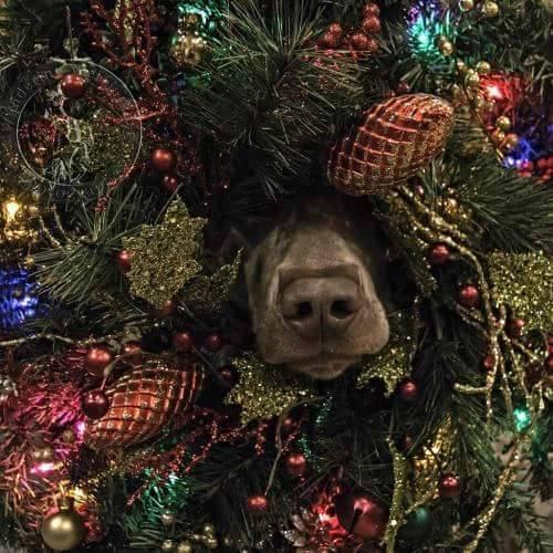 Immagini Divertenti Animali Natale.Immagini Divertenti Di Natale Con Animali