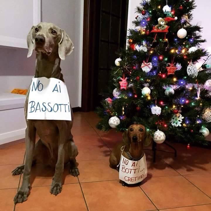 Foto Di Natale Con Cani.Foto Di Natale Con Cani Frismarketingadvies