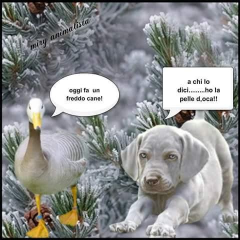frasi simpatiche neve