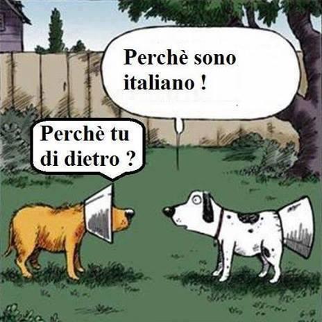Foto cani con l 39 imbuto ma uno l 39 ha messo for Vignette simpatiche buongiorno