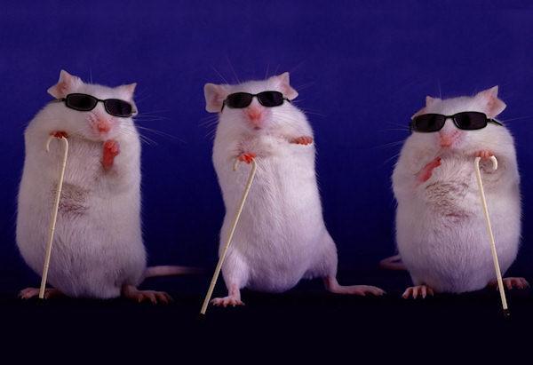 Barzellette net Foto Tre topi ciechi