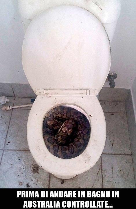 Foto pitone arrotolato dentro ad un wc for Wc immagini