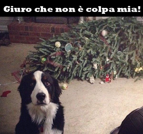 Immagini Divertenti Animali Natale.Barzellette Net Foto Cane E Albero Di Natale