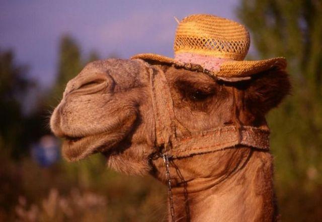 [Immagine: 3256-cammello-cappellino-paglia.jpg]