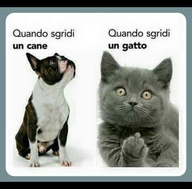 Preferenza Barzellette.net Foto: Differenza tra quando brontoli un cane e un  XW12