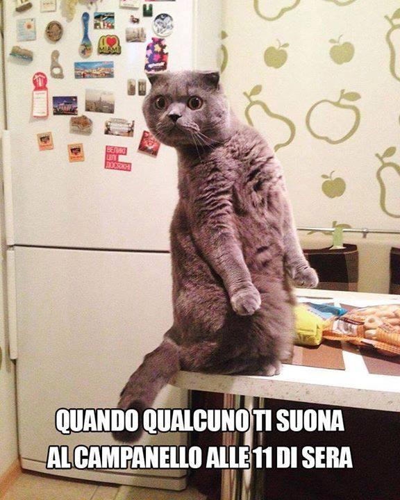 Barzellette Net Foto Gatto Sul Tavolino Con Sguardo