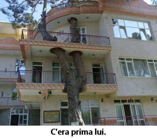 Foto casa costruita intorno ad un albero for Casa costruita
