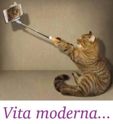 Preferenza Immagini e Foto Divertenti Gatti e Gattini IB29
