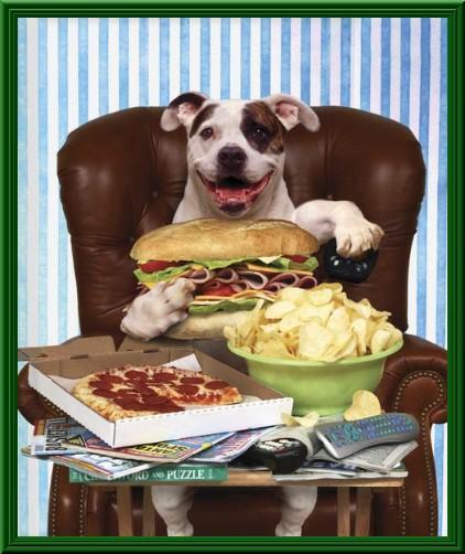 Foto cane che mangia seduto in poltrona - Cane che mangia a tavola ...