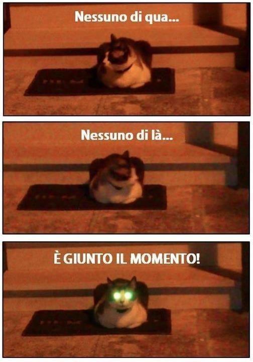 barzellette net foto  gatto con occhi verdi luminosi