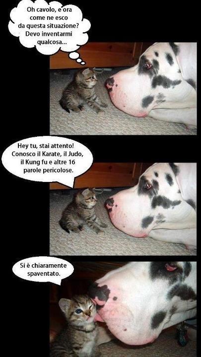 Barzellettenet Foto Gattino Che Parla Con Un Alano