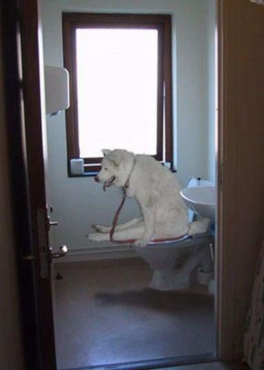 Foto cane seduto sul wc for Wc immagini