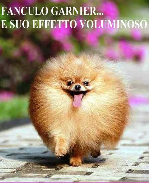 Immagini divertenti - Pagina 5 689-cane-pelo-molto-voluminoso