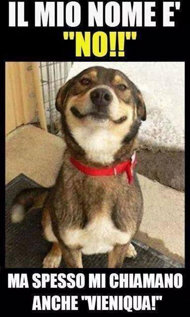 Immagini divertenti buongiorno animali