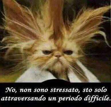 Barzellette Net Foto Gatto Con Peli Ritti Sopra La Testa