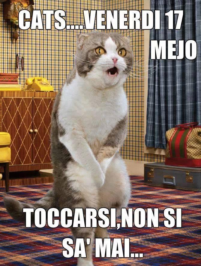 Link divertenti sui gatti cg59 regardsdefemmes for Immagini divertenti venerdi