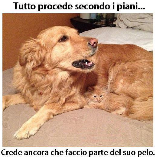 Estremamente Barzellette.net Foto: Gatto mimetizzato nel pelo del cane JT76