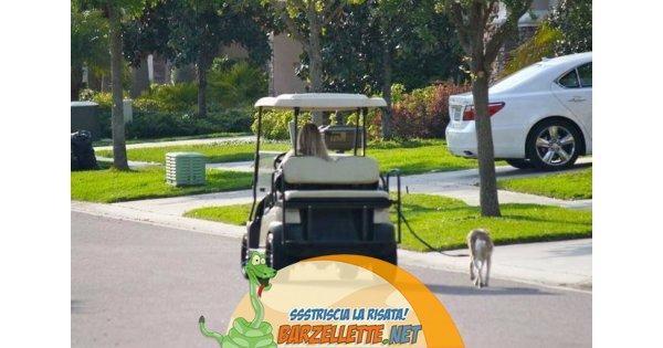 foto donna in auto che passeggia con cane al guinzagl. Black Bedroom Furniture Sets. Home Design Ideas