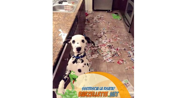 Foto dalmata che ha distrutto i giornali in cucina - Giornali di cucina ...