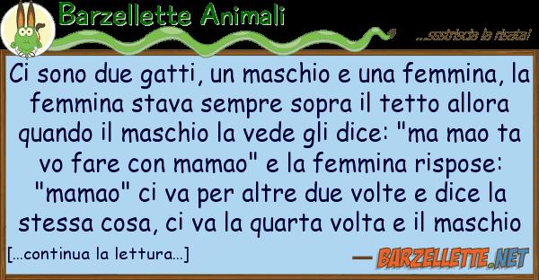 Barzellette Animali sono due gatti, maschio femm