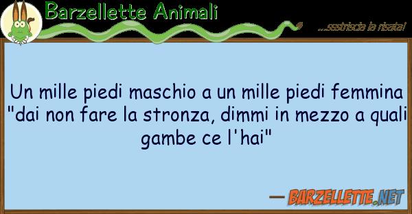 Barzellette Animali mille piedi maschio mille piedi