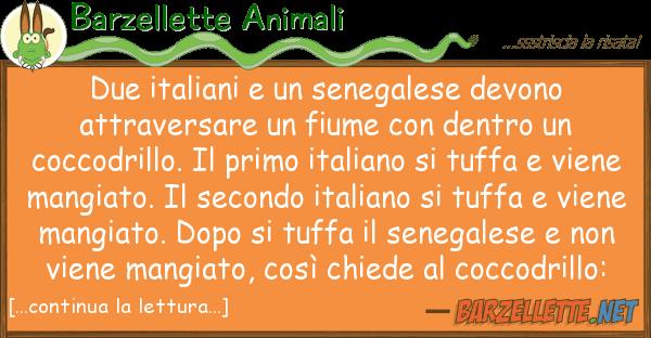 Barzellette Animali due italiani senegalese devono attr