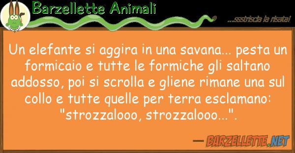 Barzellette Animali elefante aggira savana... p