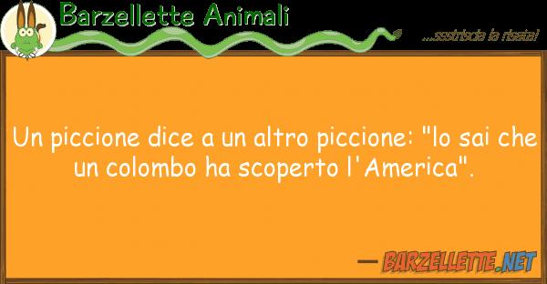 """Barzellette Animali piccione dice altro piccione: """"l"""