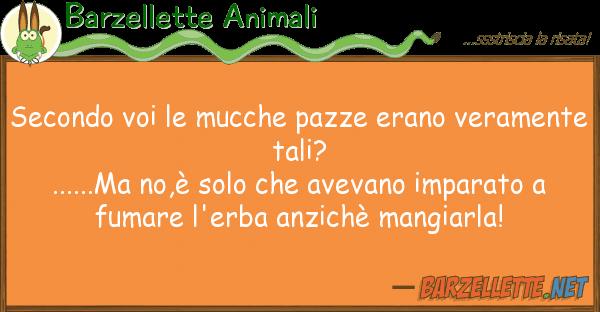 Barzellette Animali secondo mucche pazze erano verame
