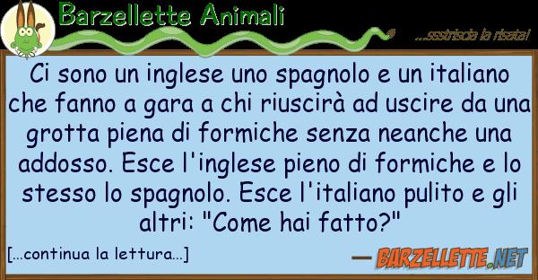 Barzellette Animali sono inglese spagnolo ita