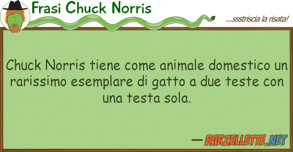 Frasi Chuck Norris chuck norris tiene animale domestic