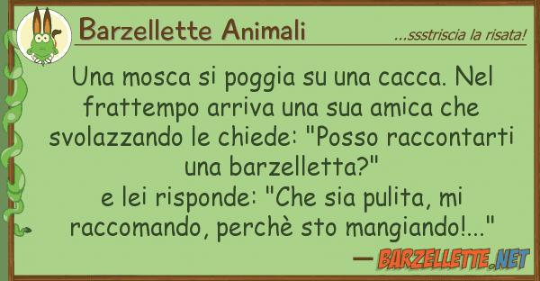 Barzellette Animali mosca poggia cacca. fr