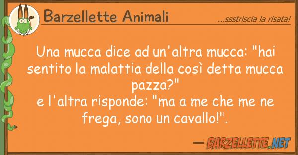 """Barzellette Animali mucca dice un'altra mucca: """"hai s"""