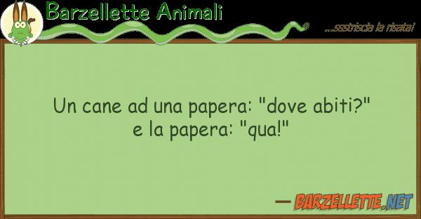 """Barzellette Animali cane papera: """"dove abiti?"""""""