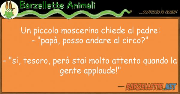 Barzellette Animali piccolo moscerino chiede padre:
