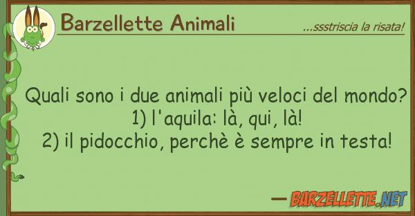 Barzellette Animali quali sono due animali pi? veloci