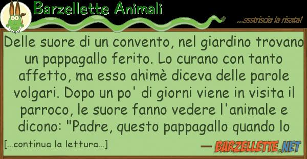 Barzellette Animali suore convento, giardino
