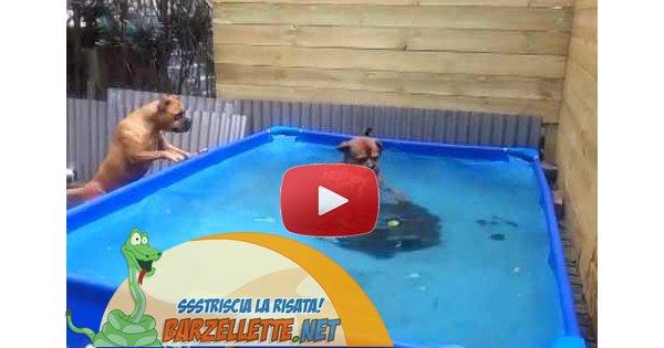 Video gioco che cade in piscina ma i cani for Gioco di piscine