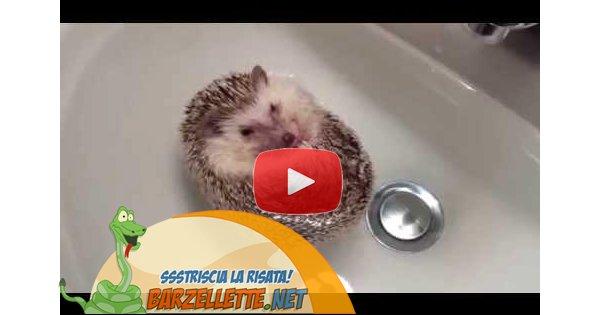 Video che tenero questo riccio che fa il bagno - Bambolotti che fanno il bagno ...